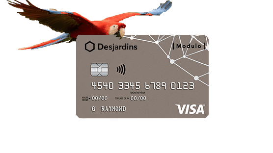 Scarlet Macaw Flying While Holding Desjardin Modulo Visa